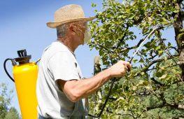 Правильная обработка плодовых культур в саду весной, летом и осенью – залог хорошего урожая